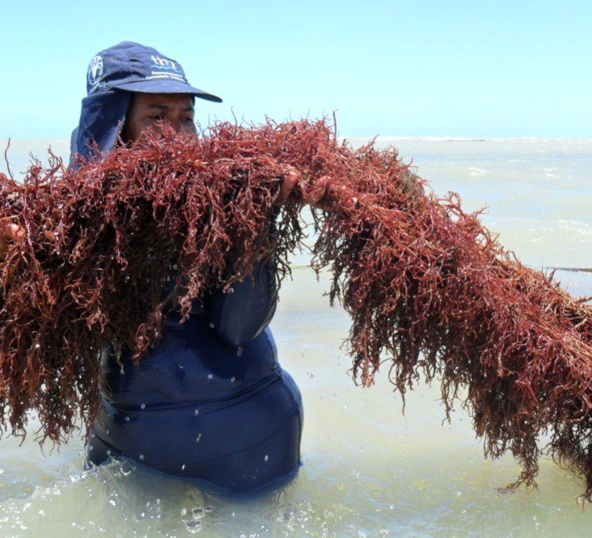 Cultivo de algas no mar