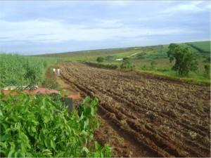 Área em preparo para implantação de um projeto de restauração ecológica
