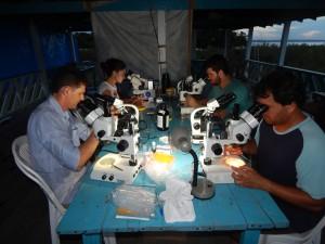Foto Tabalho no laboratorio de campo em Satantarém. (c) Edson Adriano.