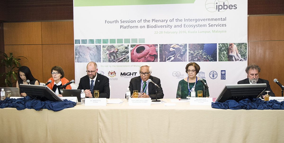 """Thematic assessment of pollinators, pollination and food production"" durante a IV Plenária da Plataforma Intergovernamental sobre Biodiversidade e Serviços dos Ecossistemas (IPBES), realizada em Kuala Lumpur, Malásia, no fim de fevereiro. (C) IISD-RS"
