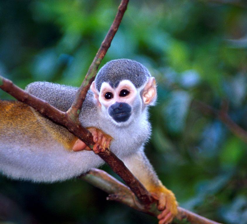 AMZ mico de cheiro