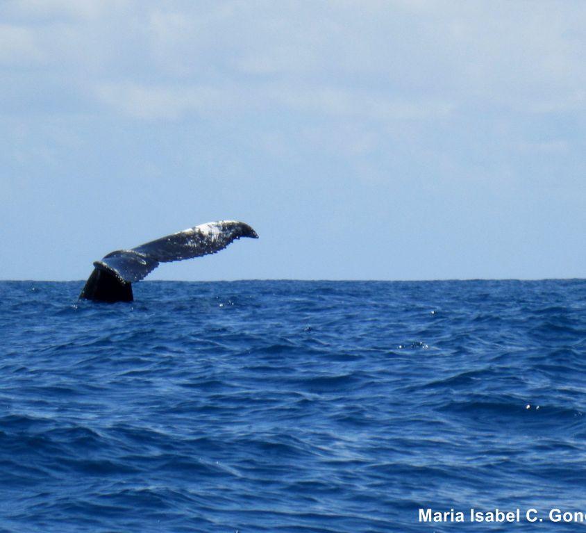 baleias_MariaISabel
