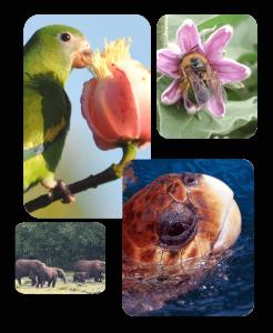 BIOTA FAPESP - homepage 001 (1)