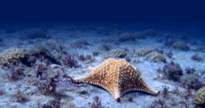 BIOTA FAPESP - homepage 2020 - fundo estrela do mar
