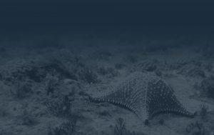 BIOTA FAPESP - homepage 2020 - fundo estrela do mar v2