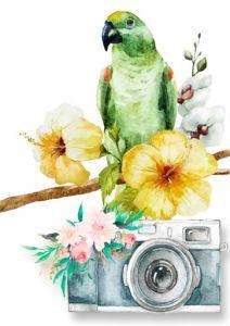 BIOTA FAPESP - Concurso Fotografia 2020 - Pagina principal - Ave com camera